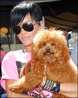 Rihanna's Short Hairstyle